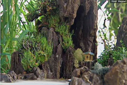 penjing, miniature chinese landscapes, at san francisco's conservatory of flowers