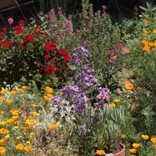 Mayday garden detail