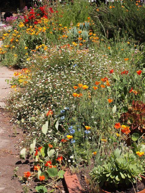 Garden, 7 May 2017.