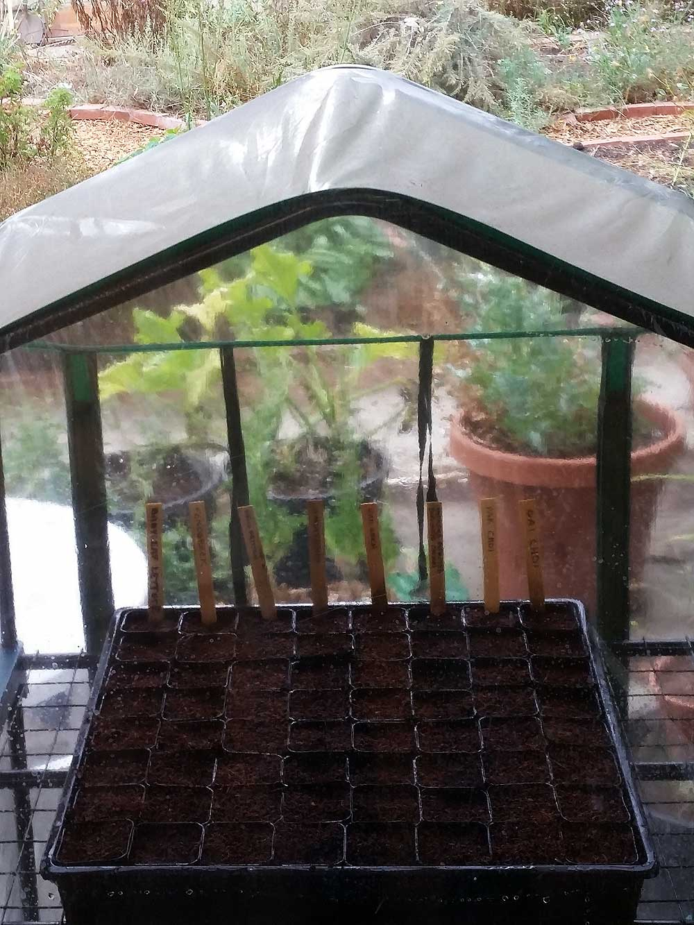Flat in small greenhouse