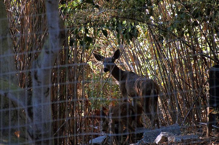 bambi flummoxed