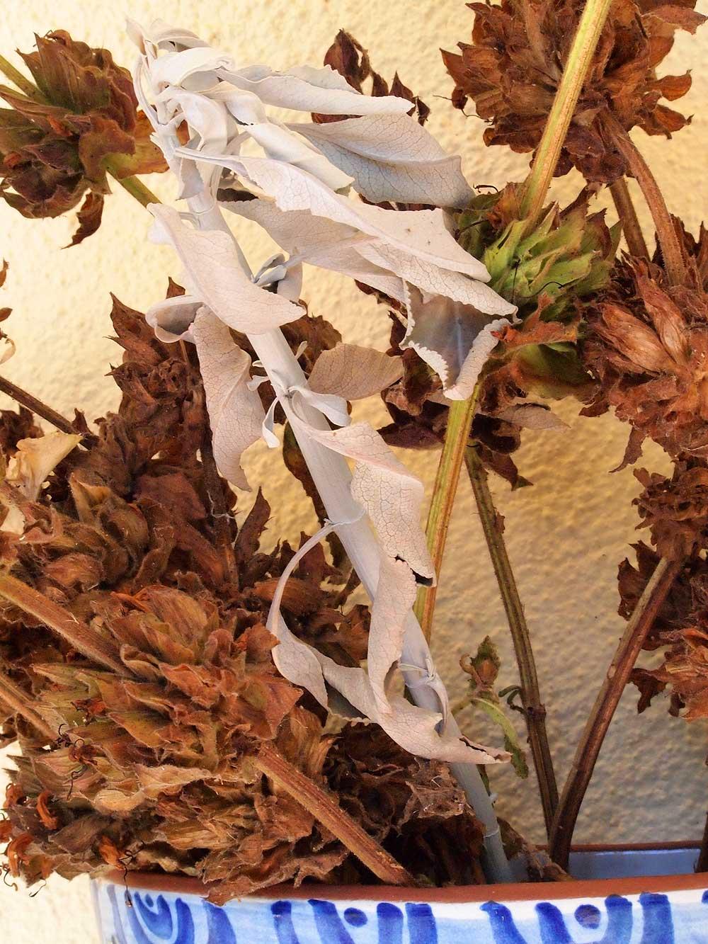 Hummingbird Sage and White Sage (California natives).